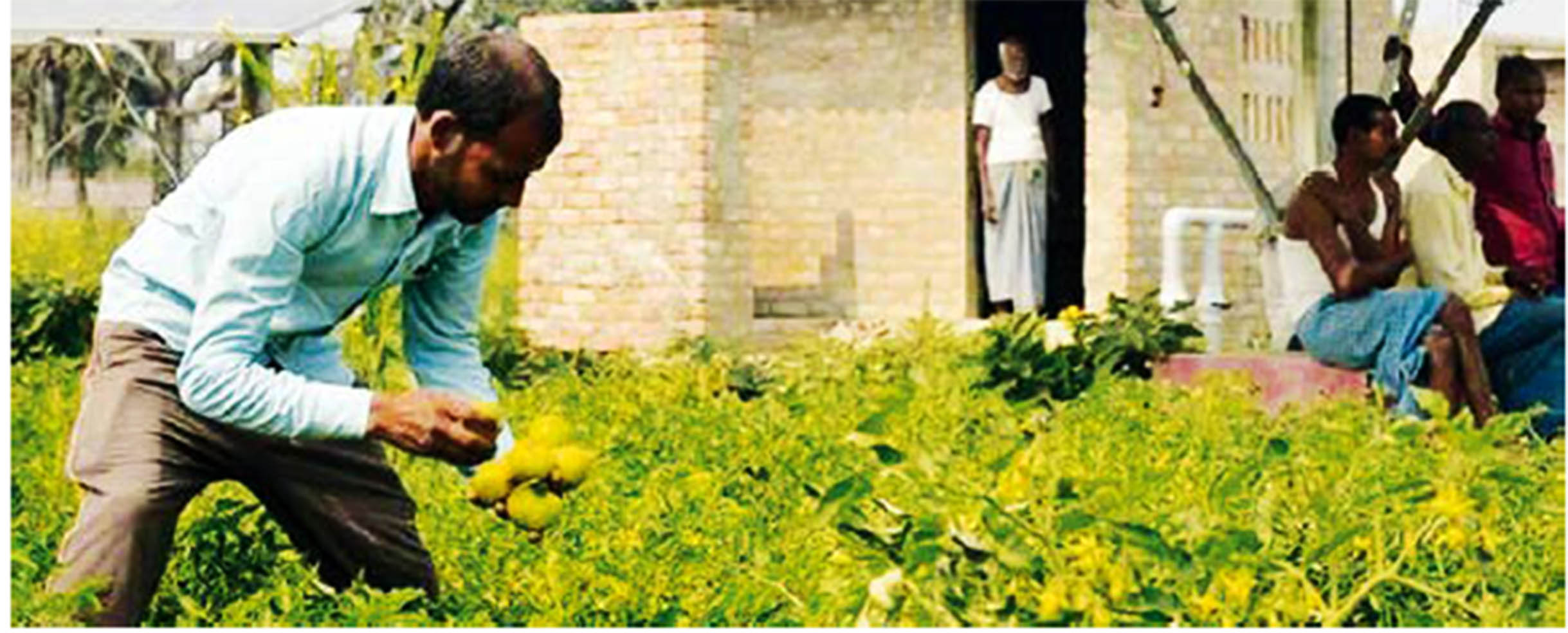 The average returns for vegetable cultivation in Chak Haji turns out to be Rs 79,179 per ha for one crop. (Image: AKRSP)