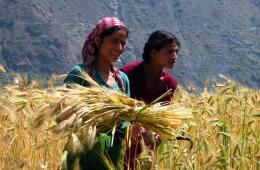 Though women are involved in economic activities of the cropping system but their role is negligible in household decision making and participation (Image: PxHere)