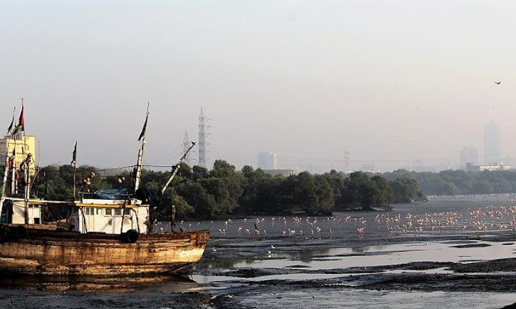 A wetland in Mumbai (Source: IWP Flickr photos)