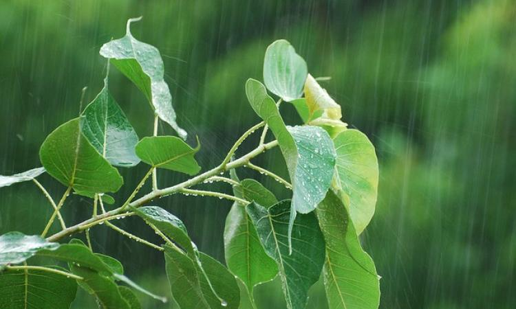 July experiences rain deficit of 10 percent (Source: IWP Flickr photos)