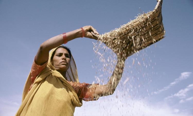 The prolonged lockdown has increased the dependence of farmers on food supply through the public distribution system as well as the need to grow a good crop in kharif season. (Image: UNESCO)