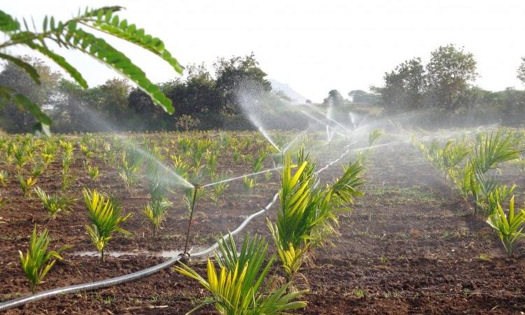Micro-irrigation and its impact on groundwater (Image Source: India Water Portal)