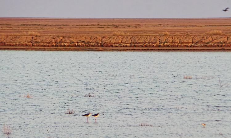 The Little Rann of Kutch (Image source: India Water Portal)